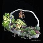 参考画像2: 綱木紋・鉢・アロワナ・ホワイト&グレー系A・現品