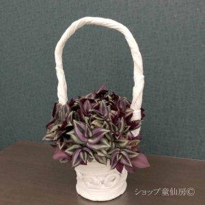 画像3: トラディスカンティア・【プラチナエレガンス】綱木紋籠